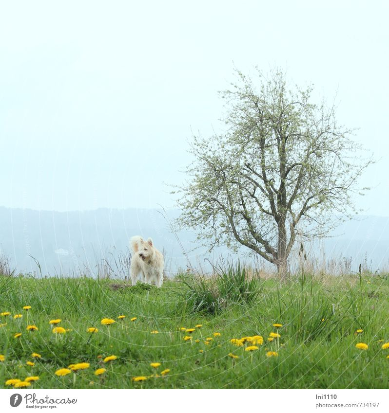 Dog Sky Nature Blue Green White Plant Flower Landscape Joy Animal Yellow Meadow Spring Grass Blossom