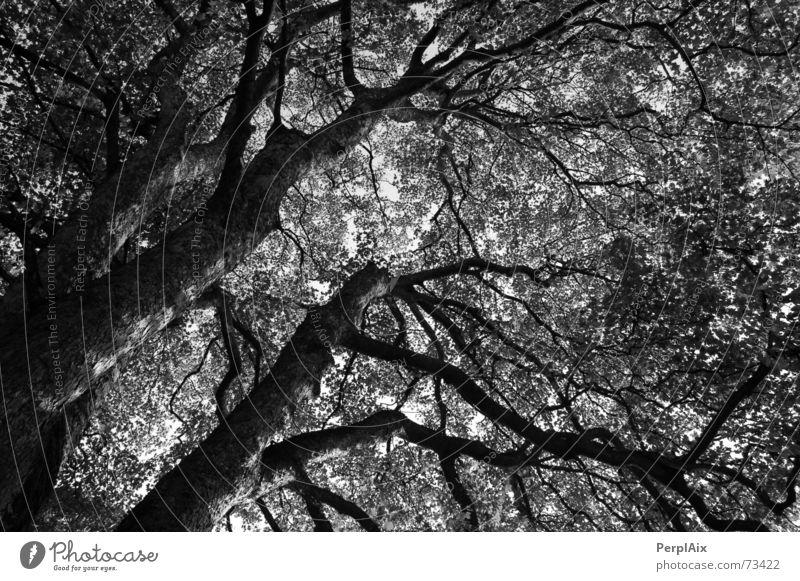 Nightmare tree Tree Eerie Organic Vessel Fear Surrealism