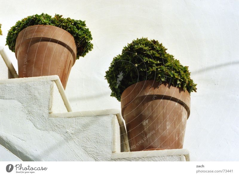 What rhymes with herb pot? Gradation White Flower Pot Herbs and spices Greece Santorini Diagonal Nutrition Plant Terracotta Parsley Kitchen Gastronomy Vegetable