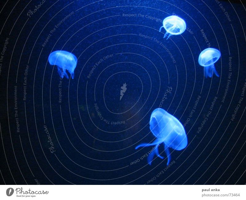 Ocean Blue Dark Lake Bright Jellyfish