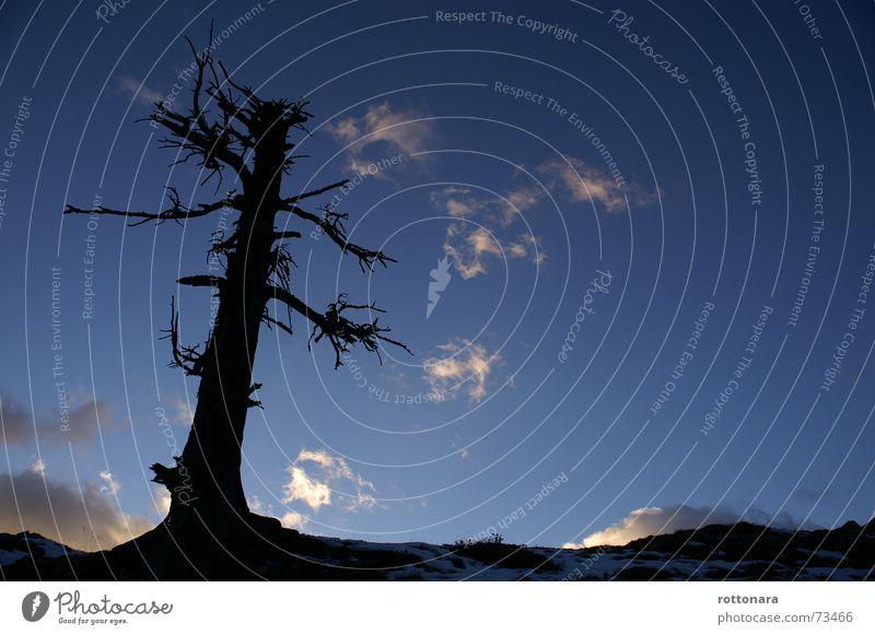 Nature Sky Tree Blue Black Clouds Dark Cold Autumn Death Mountain Freedom Dream Landscape Air Fear