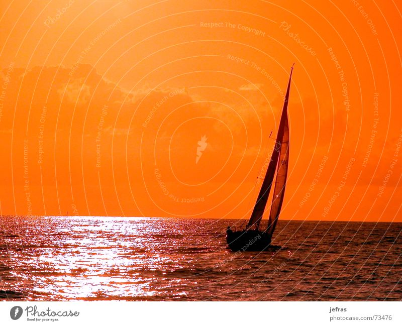 sailing to the sunset Sky Summer Sunset boat cruise Electricity pylon ocean Orange sea ship