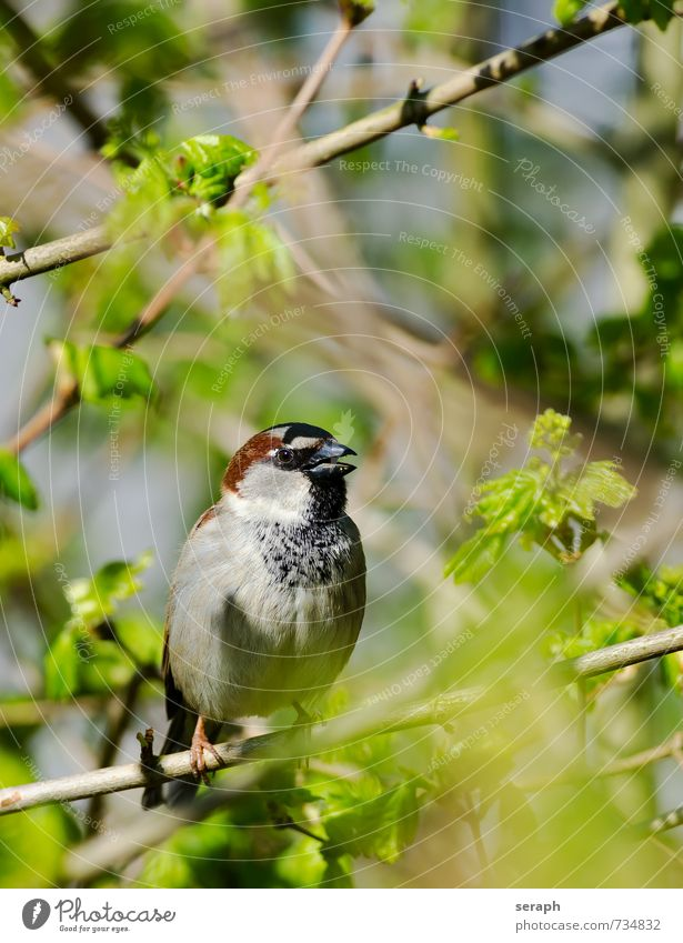 Sparrow Feather Bird Beak plumage Ornithology Bushes Hide Hiding place Hidden Undergrowth Tree Garden Branch Twig Leaf hiding Nature wildlife Wild Wing