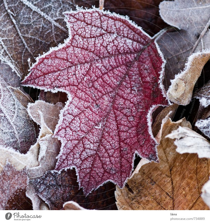 Nature Old Leaf Winter Cold Forest Environment Natural Garden Park Ice Change Frost