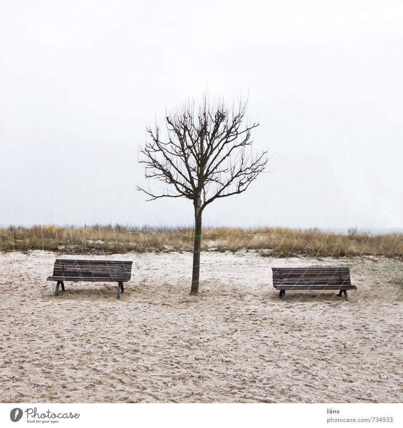 Sky Nature Tree Loneliness Landscape Calm Beach Winter Environment Autumn Sand Leisure and hobbies Earth Contentment Bench Baltic Sea