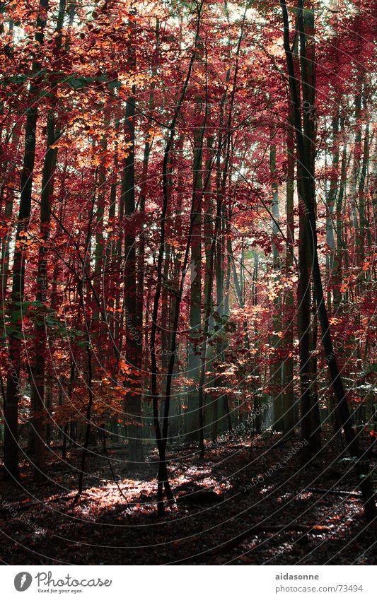 Leaf Forest Autumn Lighting