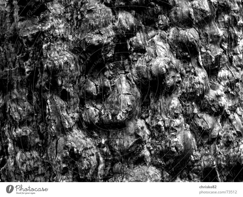 Tropical Bark Tree bark Virgin forest Hill Contrast Structures and shapes