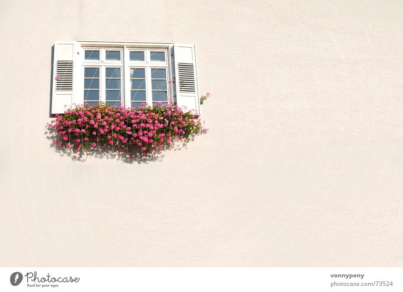 White Flower Red Wall (building) Window Warmth Pink Glass Closed Clean Physics Friendliness Beautiful weather Plaster Shutter Half-timbered facade
