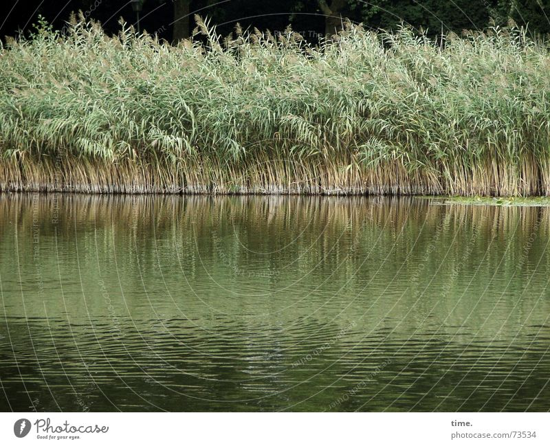 cold feet Water Wind Grass Foliage plant Park Lakeside Pond Together Green Contentment Movement Society Environment Growth Common Reed Low water Tilt dry feet