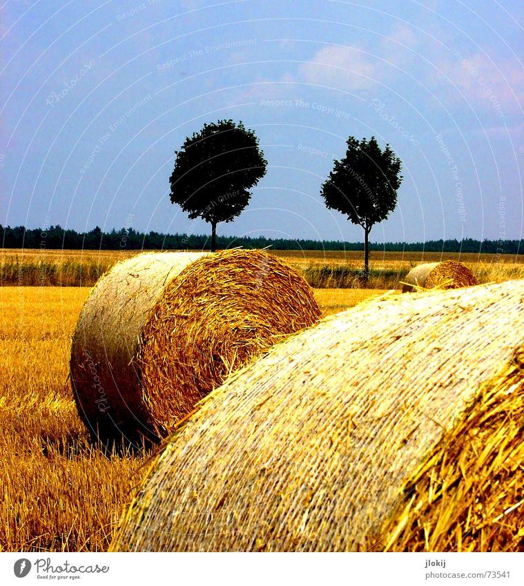 Nature Tree Yellow Autumn Work and employment Field Romance Grain 5 Seasons Harvest Tree trunk Grain Coil Wheat Feed