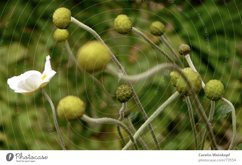Nature White Green Plant Summer Flower Loneliness Yellow Autumn Movement Blossom Park Together Wind Ball To fall