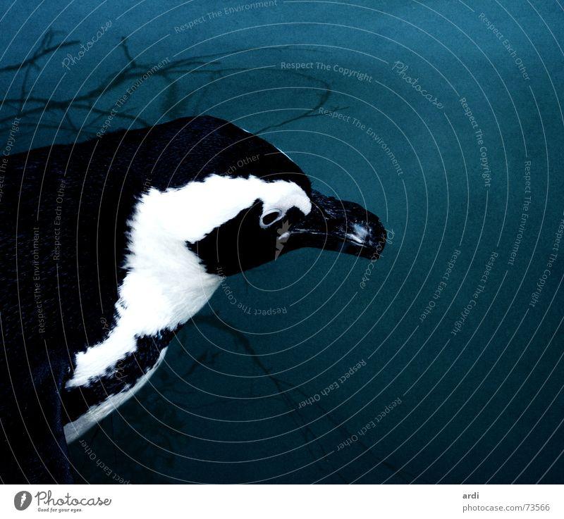 Water White Ocean Blue Black Animal Dark Cold Lake Bird Wet Feather Zoo Deep Patch Beak