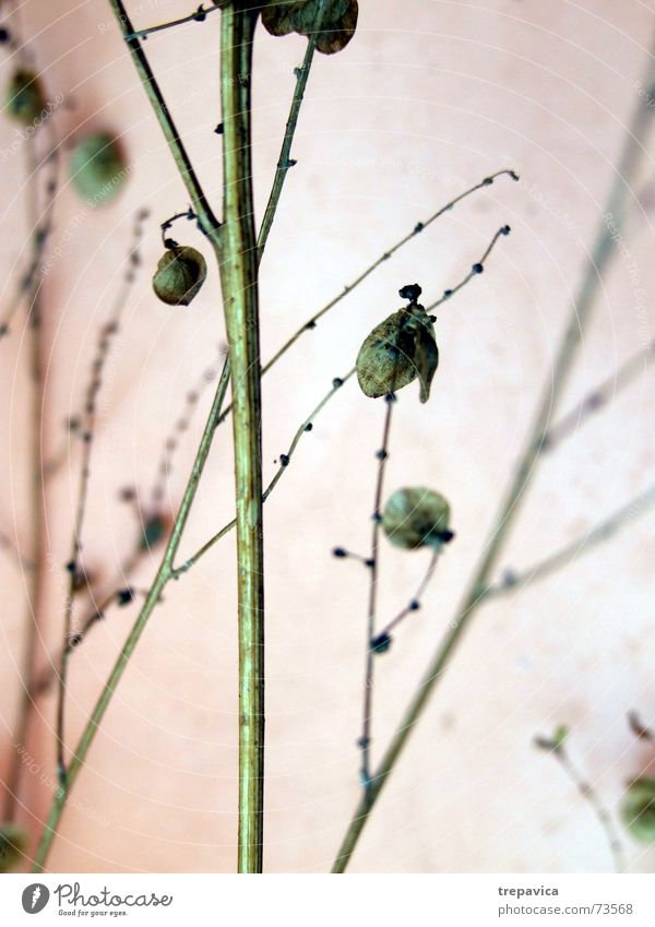 Nature Flower Green Plant Blossom Thin Branch Delicate Dry Seed Twig Fine Dried Dried flower