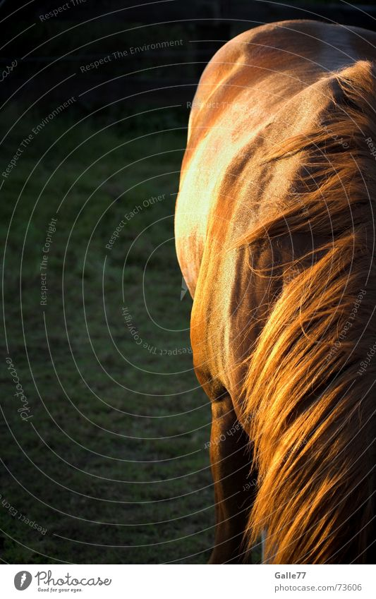 Summer Calm Meadow Hair and hairstyles Back Horse Pasture Cowboy Western Mane