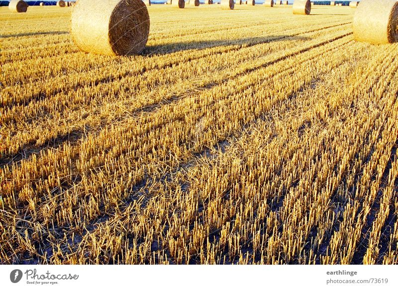 Field at the end Straw Summer Yellow Bale of straw Stubble field Landscape format Analog Roll Evening Stopper Deep Grain Harvest Warmth Shadow