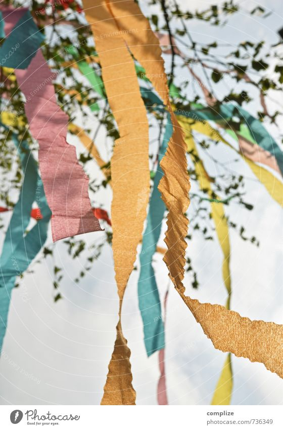 maypole Joy Happy Flirt Feasts & Celebrations Fairs & Carnivals Sky Spring Plant Tree Leaf Foliage plant Sign Love Dream Living or residing Friendship Loyalty