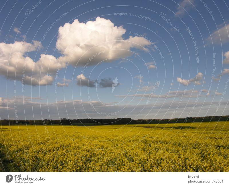 flyaway Clouds Field Far-off places Calm Horizon Sky Infinity Freedom