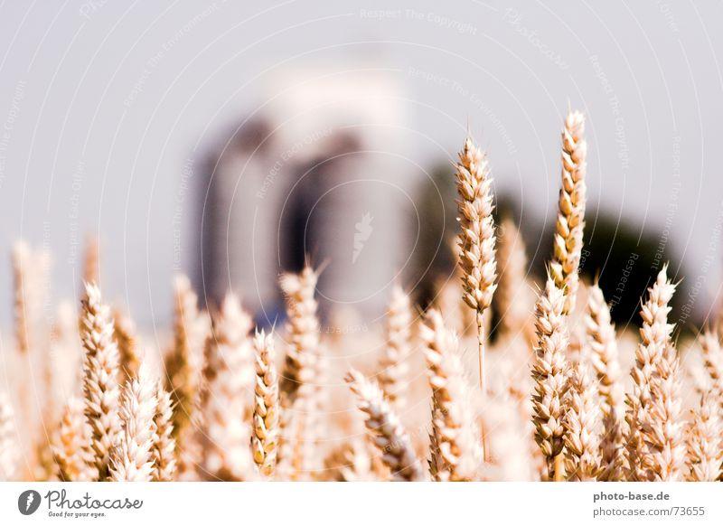 Sun Summer Field Farm Grain Wheat Silo