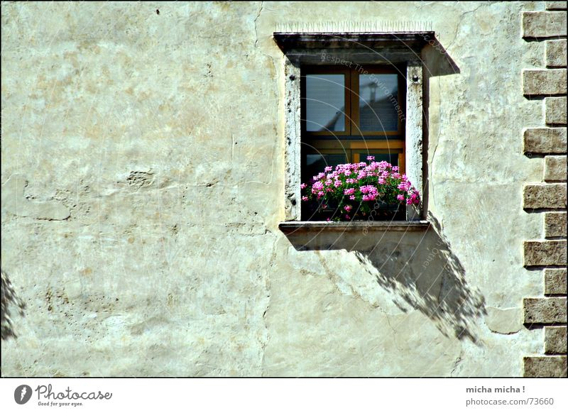 small shade, big shade Italy Lake Garda Facade Flower Blossom Window Plaster Arco Shadow Mediterranean