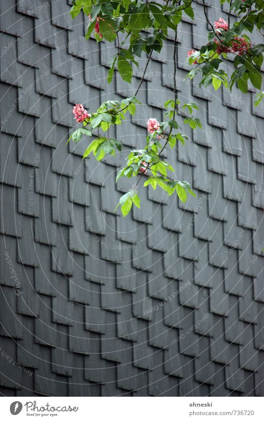 live better Spring Tree Blossom Horse chestnut Chestnut tree House (Residential Structure) Wall (barrier) Wall (building) Facade Roofing tile Slate Spring fever