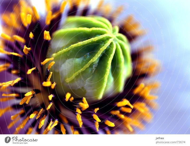 Nature Calm Life Art Background picture Design Elegant Part Original Inspiration