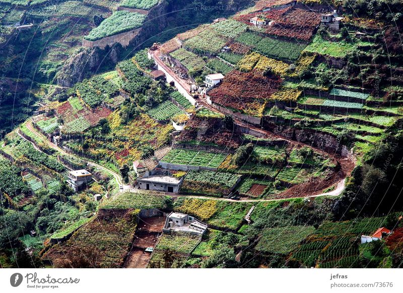 vineyard agriculture in the Madeira Island House (Residential Structure) wine mountains fields landscapes Houses rural