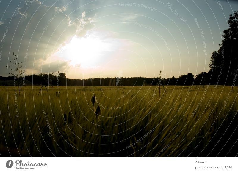 Sky Sun Summer Far-off places Forest Landscape Field Grain Cornfield