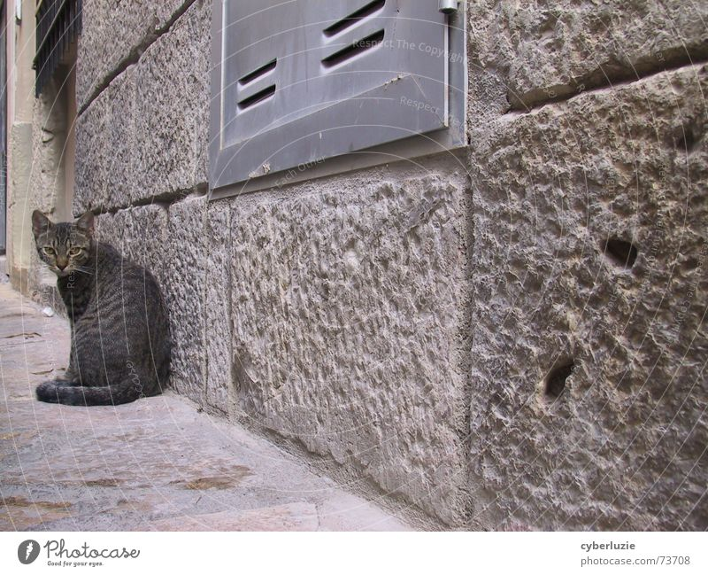 Cat Animal Street Wall (building) Gray Wall (barrier) Corner Pelt Snapshot Escape