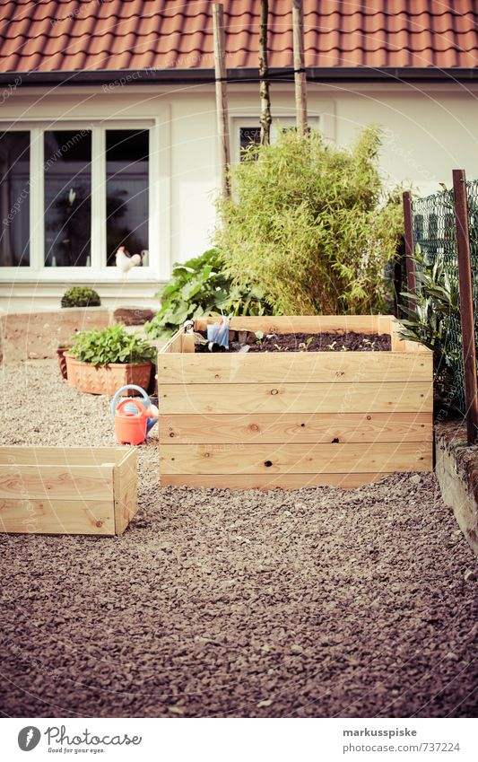 raised bed urban gardening Food Vegetable Lettuce Salad Fruit Herbs and spices Organic produce Vegetarian diet Diet Fasting Lifestyle Style Design Joy Happy