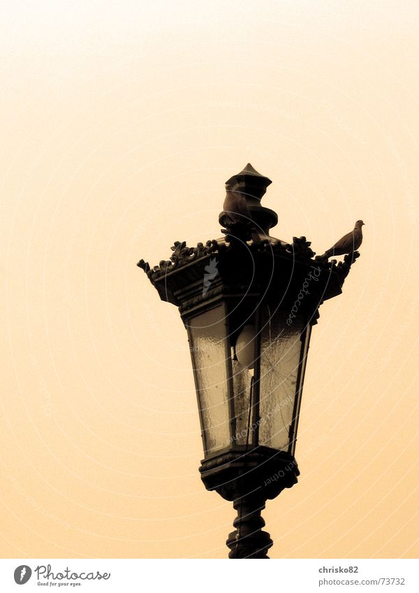 Old Lamp Bright Vantage point Decoration Lantern Broken Pigeon Road marking