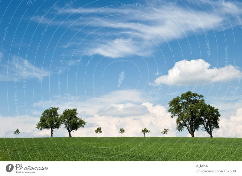 behind the horizon it goes on. Environment Nature Landscape Plant Elements Air Sky Clouds Horizon Spring Beautiful weather Tree Grass Meadow Field Hill