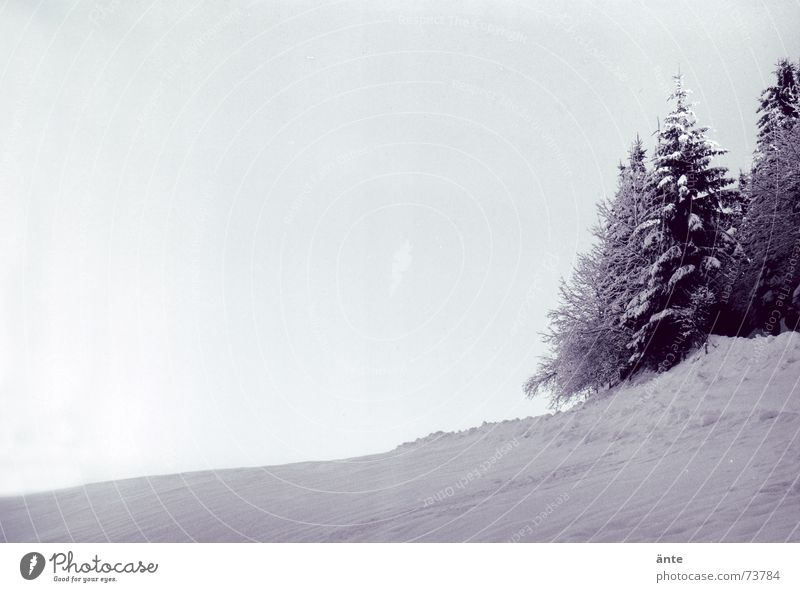 Do you hear the silence? Clink Cooling Winter Fir tree Snow Cold Calm Ice Fresh Hiking Forest Hill Tree Analog Sky Coniferous forest Serene Black & white photo