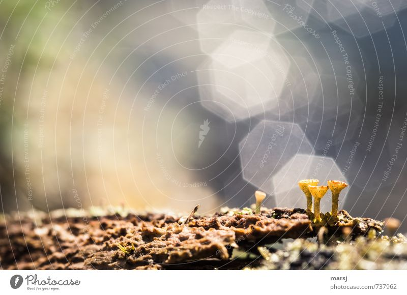 Mysterious Miniworld. Nature Plant Spring Summer Beautiful weather Moss Lichen Exceptional Simple Success Creepy Natural Multicoloured Decompose Colour photo