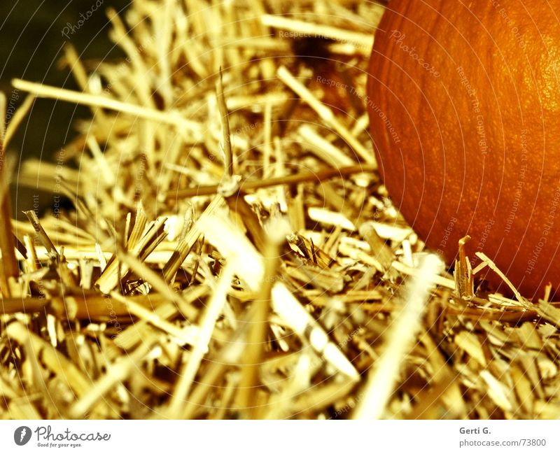 Healthy Orange Food Nutrition Decoration Agriculture Vegetable Farm Blade of grass Hallowe'en Straw Feed Pumpkin Bale of straw Pumpkin seed Whole grain bread