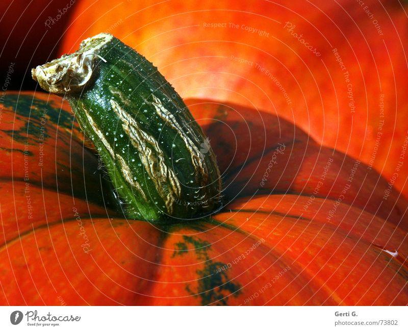 Green Colour Autumn Healthy Orange Food Nutrition Agriculture Vegetable Stalk Fat Hallowe'en Pumpkin Pumpkin time Pumpkin seed Vegetable soup