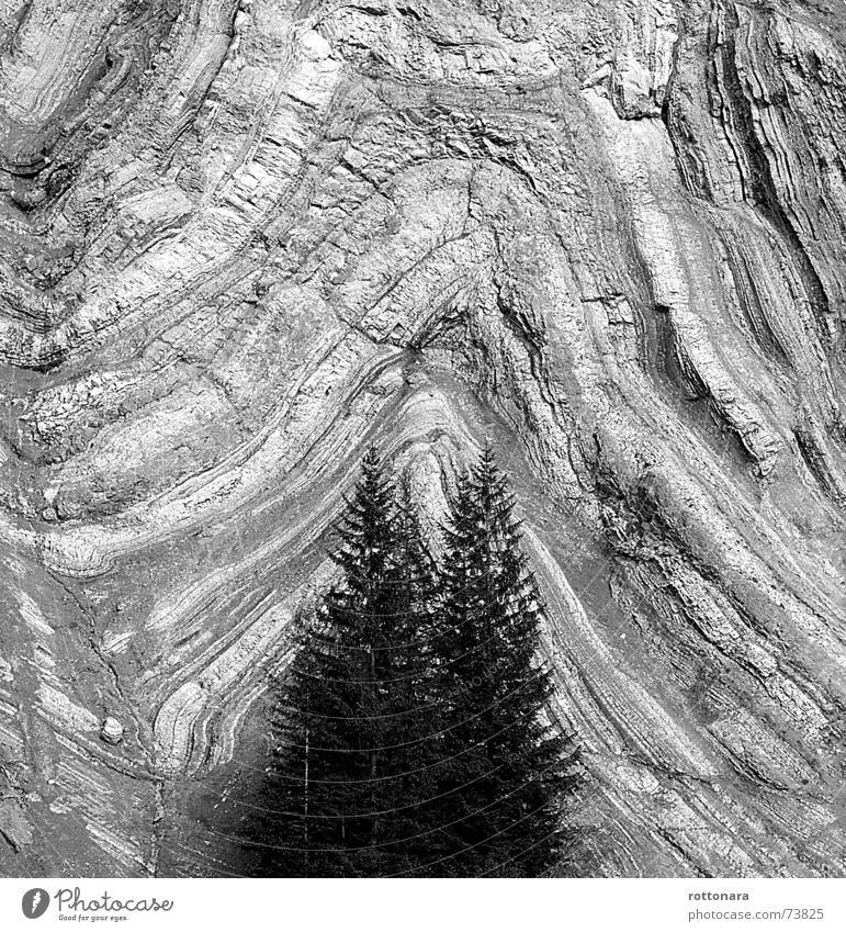LayersWALD Forest Black White Gray Background picture Spruce Tree 2 3 Wall of rock Wall (building) Dolomites South Tyrol Italy Rock Shift work Volcano