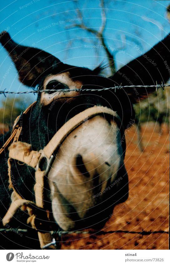 ass Majorca Tree Brown Vacation & Travel Muzzle Sky Earth Donkey