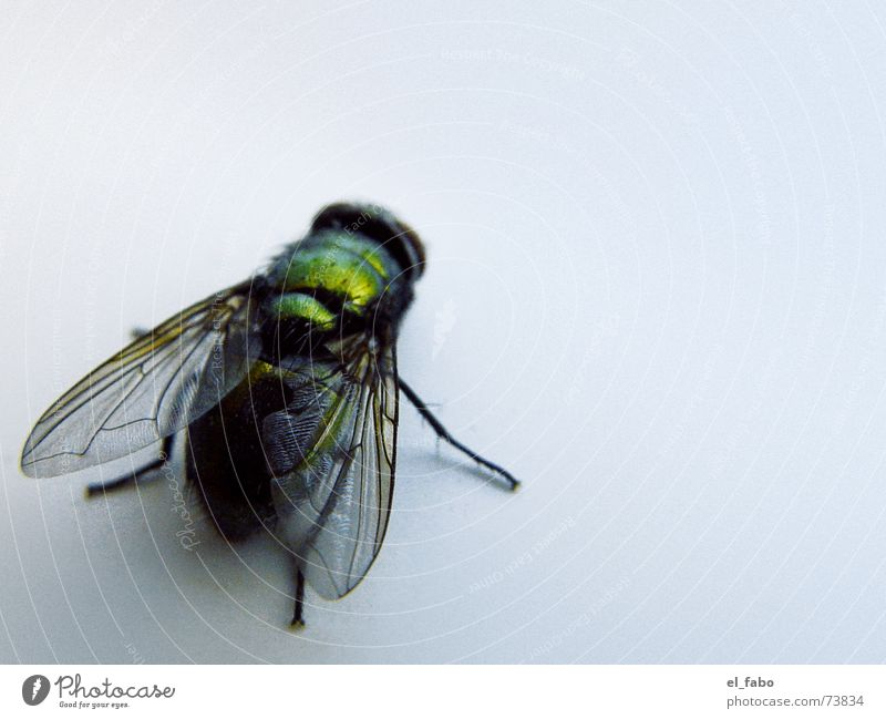 Green Glittering Fly Wing Insect Bee Disgust