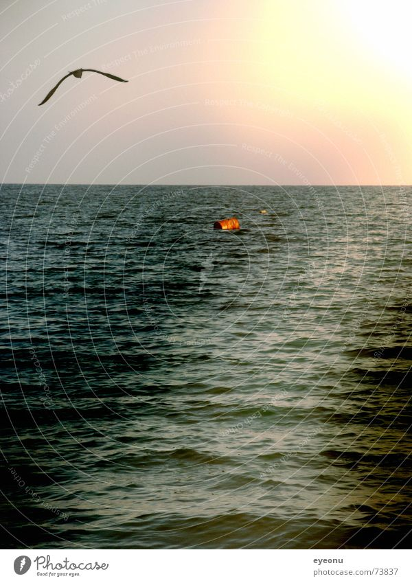 Water Sun Ocean Far-off places Navigation Seagull Dusk Buoy Flare Beam of light Bulgaria Black Sea