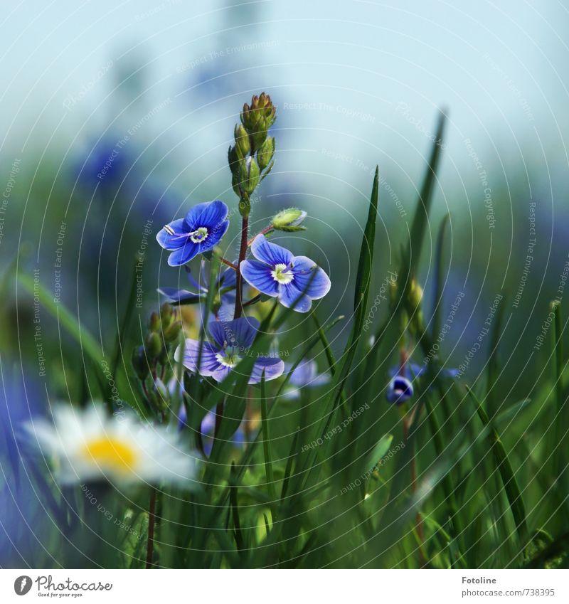 Sky Nature Blue Green White Plant Flower Yellow Environment Meadow Spring Blossom Bright Garden Park Fresh