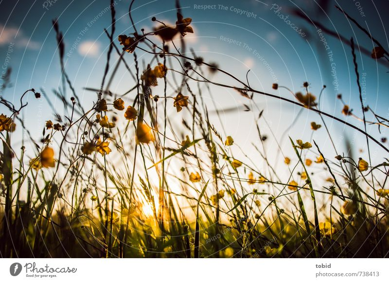 spring meadow Summer Sun Nature Landscape Plant Sky Clouds Sunrise Sunset Sunlight Spring Beautiful weather Flower Grass Meadow Spring flower Spring day