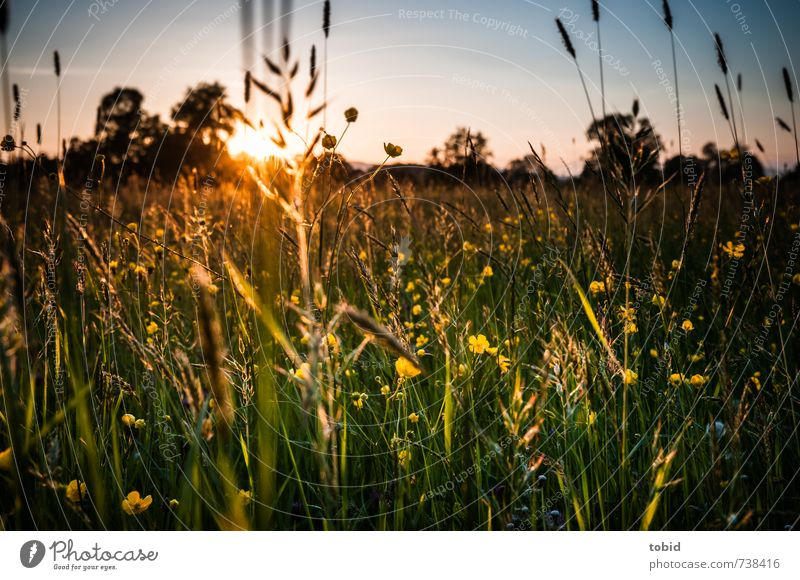 beautiful sunset Summer Sun Nature Landscape Plant Sky Cloudless sky Sunrise Sunset Spring Beautiful weather Tree Flower Grass Meadow Spring flower Spring day