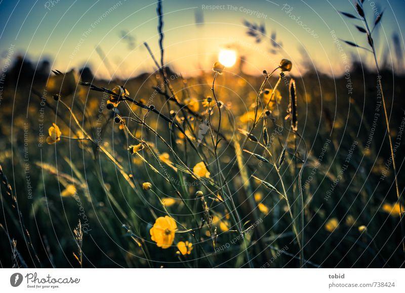 Sky Nature Blue Beautiful Green Colour Plant Sun Landscape Yellow Spring Grass Freedom Horizon Gold Idyll