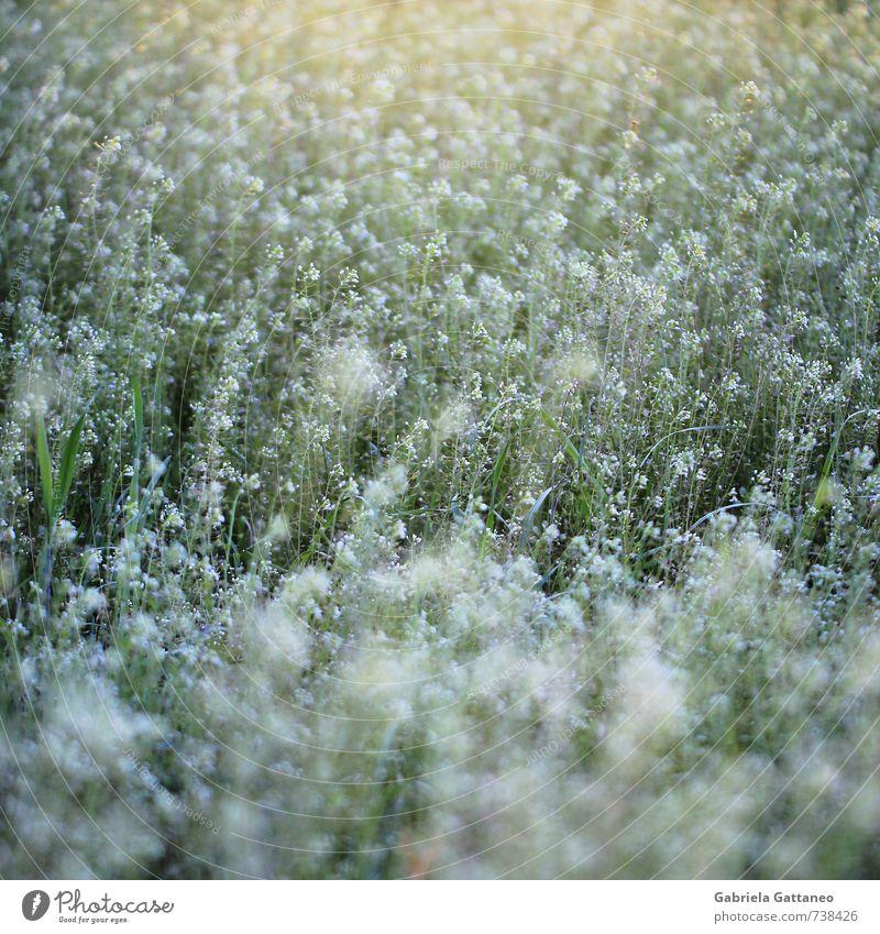 Nature Green Plant Animal Wild Wild plant