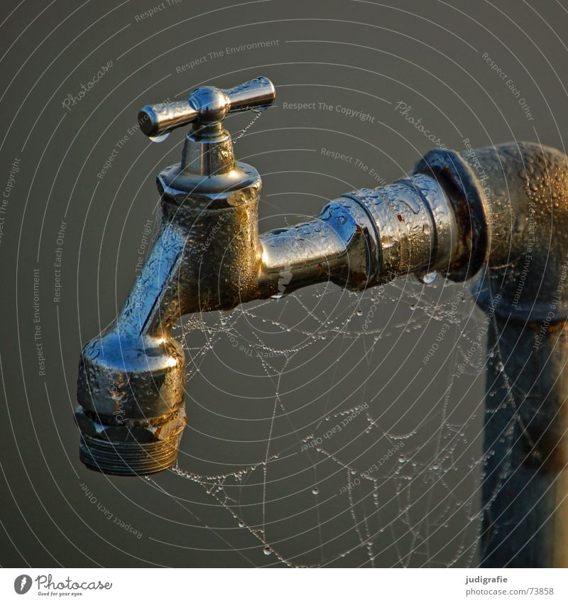faucet Tap Wet Spider's web Cobwebby Drops of water Dew Morning Damp Fog Connection Glittering Water Metal Erudite Footbridge Screw thread Iron-pipe