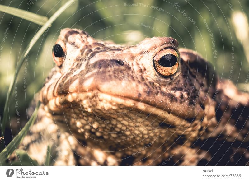 I know what you did last summer. Beautiful Garden Environment Nature Animal Spring Summer Autumn Beautiful weather Plant Grass Meadow Wild animal Painted frog