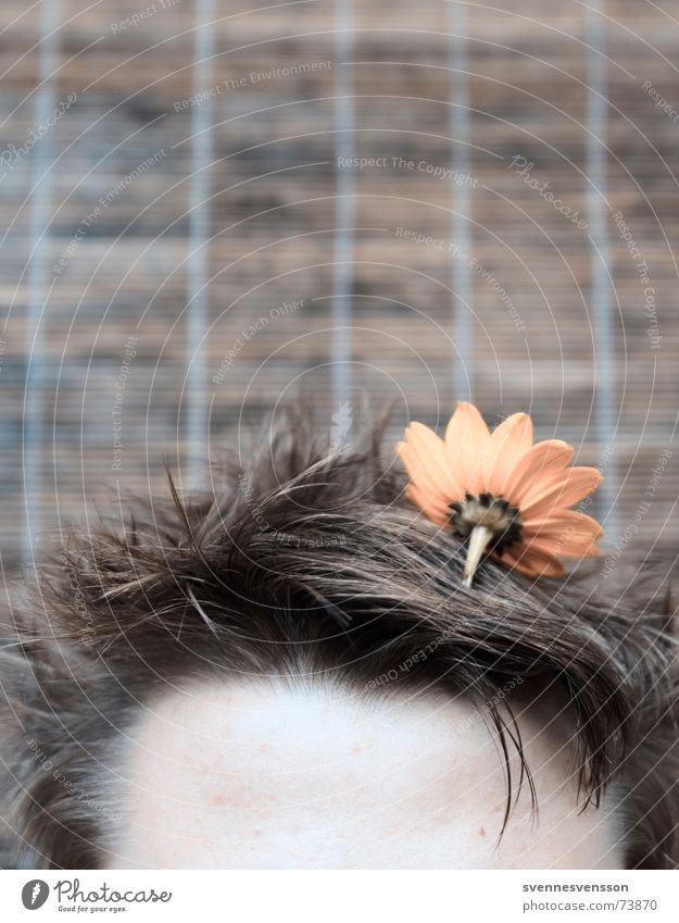 Brownflower in hair biotope Flower Plant Forehead Head Habitat Hair and hairstyles Freak show