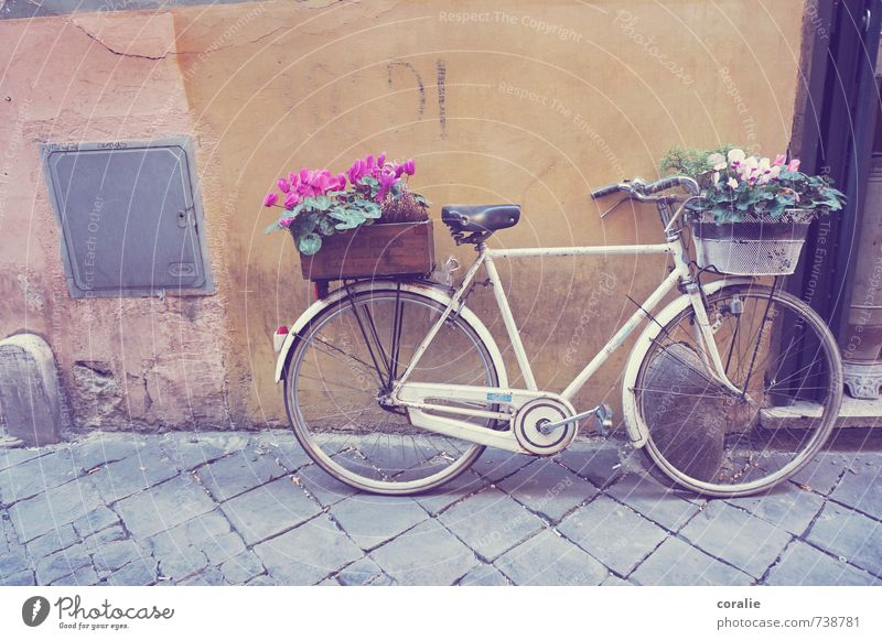 Cycling's nice. Lifestyle Happy Summer Living or residing Flat (apartment) Decoration Bicycle Art Spring Flower Garden Village Downtown Old town Wall (barrier)
