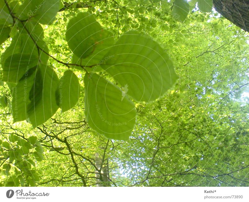 spring trees Freedom Environment Nature Spring Tree Leaf Forest Fresh Healthy Natural Juicy Green Spring fever To console Calm Life Hope Belief Fragrance