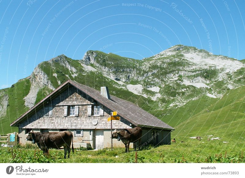 cosy alp Gray Gravel Overgrown Switzerland Stone Limestone Mountain range Peak Home country Alpine pasture Grass Cow Cattle All-weather Roof Stability Brown